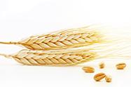 Селен в зерновых